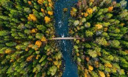 Aerial view of fast river flow through the rocks and colorful forest. Autumn in Finland, Oulanka national park.